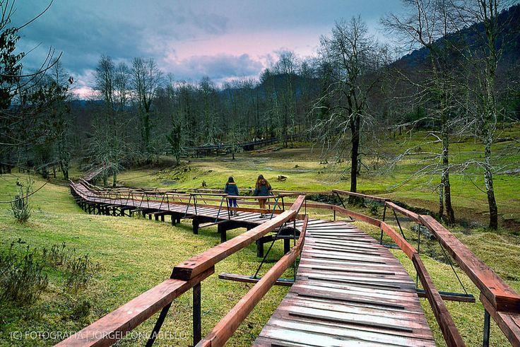 Bosque de Los Venados - Reserva Biológica Huilo Huilo (Neltume - Chile) | by Noelegroj