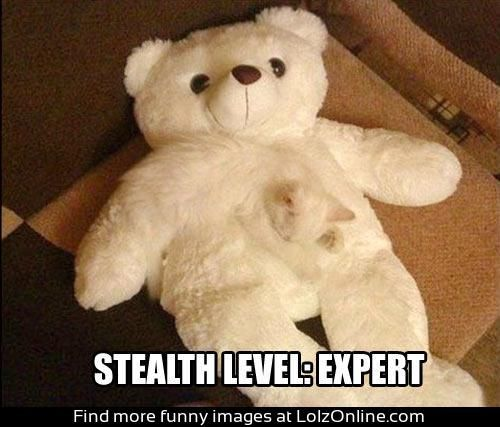 Stealth level: EXPERT. Just goes to show a cats innate brilliance – I would expe