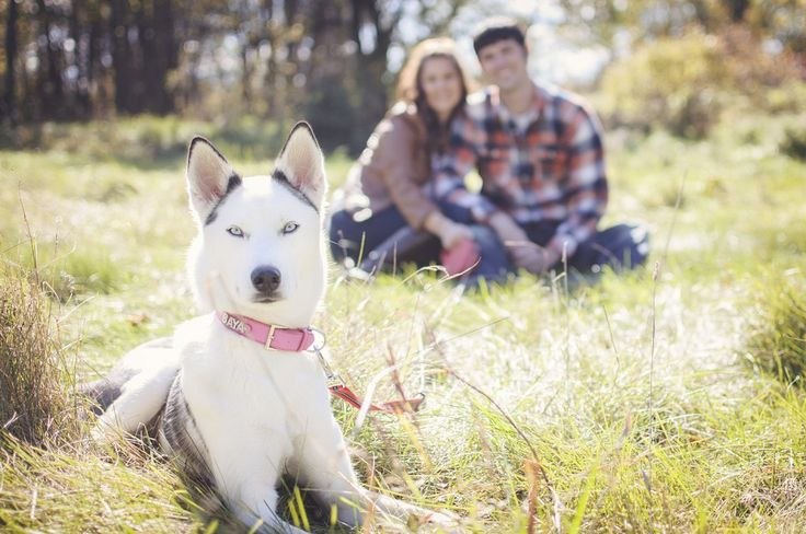 Family pet photography | dog