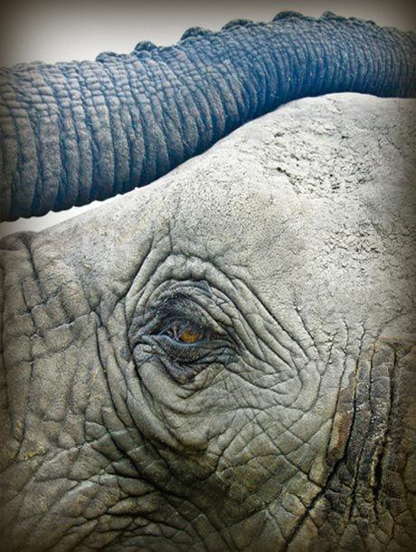 Elephant encounters  www.lederlesafaris.com