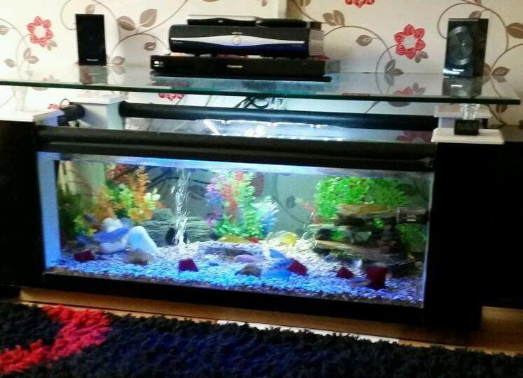Best 25 fish tank coffee table ideas on pinterest fish for Fish tank coffee table for sale