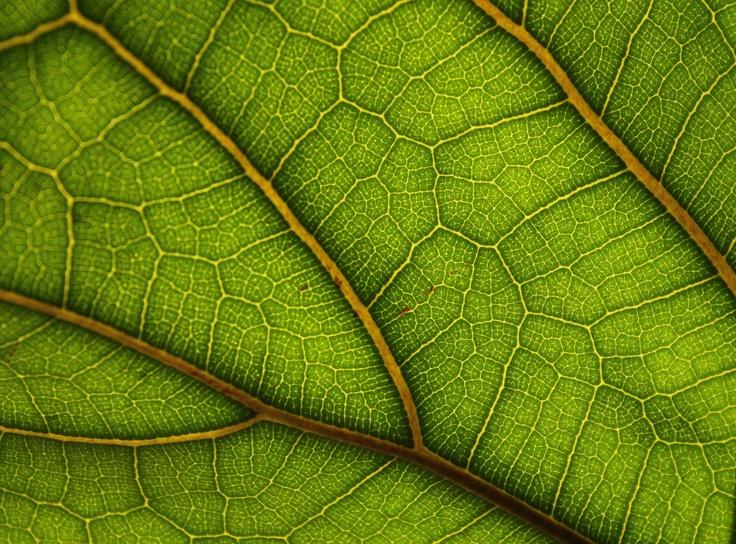 leaf.: Thesis Inspiration, Senior Thesis