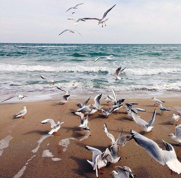 Крым. Море. Чайки. Осень.