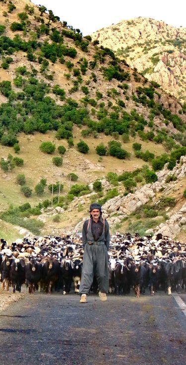 Kurdish Sheperd and his Flock crossing a Road in the Province Kurdistan, Iran. Photo by Payam Karimi