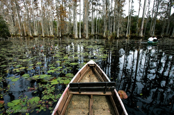 Charleston Sc Cypress Gardens Voyage Pinterest