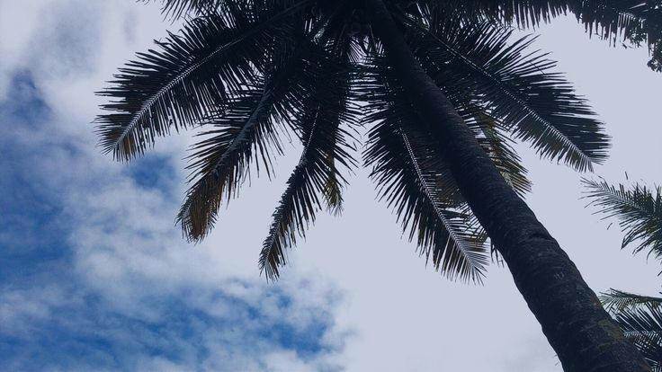 tree x blue sky x aesthetic