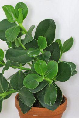 25 best ideas about zimmerpflanzen pflege on pinterest. Black Bedroom Furniture Sets. Home Design Ideas