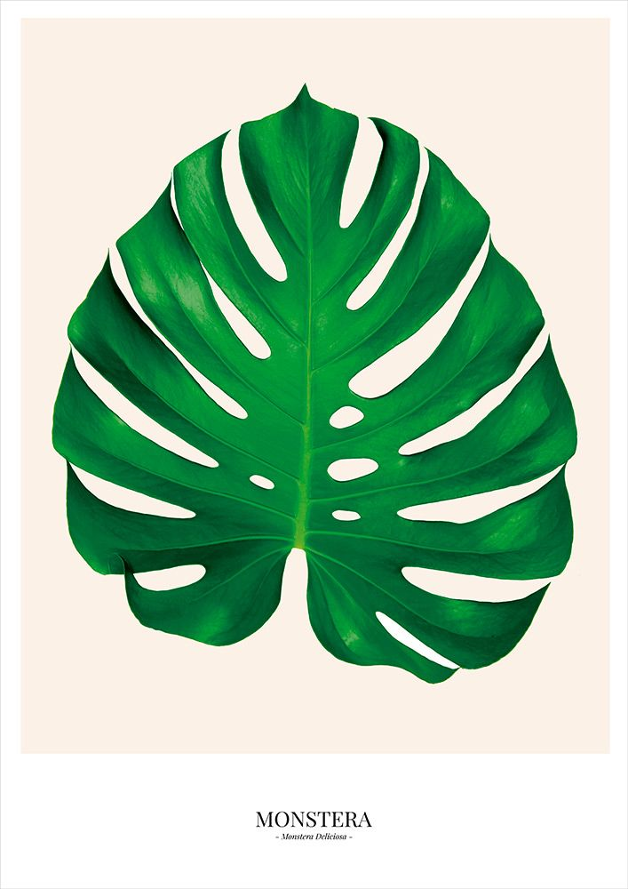 Poster Monstera - Costela de Adão                                                                                                                                                                                 Mais