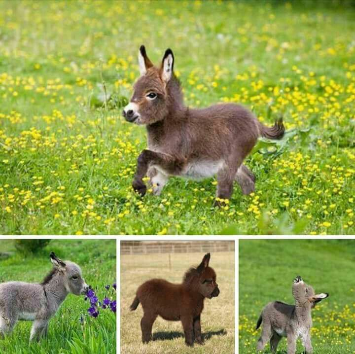 just some pics on pretty little donkeys to make you happy :3