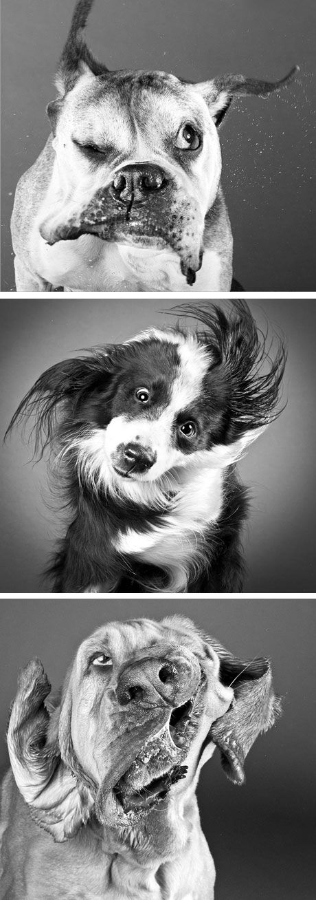 'Shake', a series of photos by the photograph Carli Davidson consists of portraits of dogs as they shake off water. This makes me laugh :)