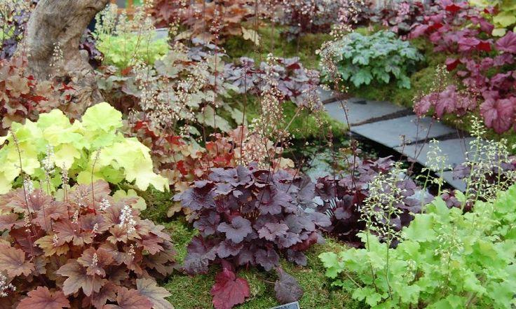 Dlužicha - ozdoba záhonů i skalek | Magazín zahrada
