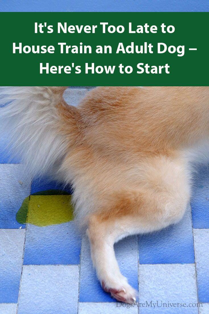 House Training An Adult Dog Dogs Dog Training Training Your Dog