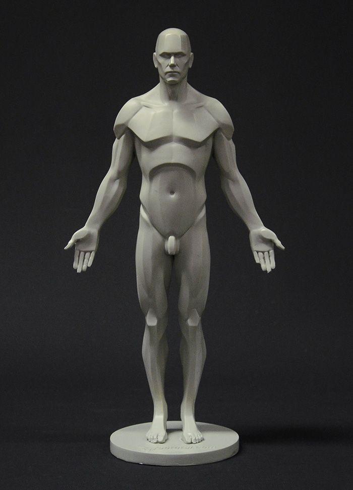 3dtotal anatomy figure