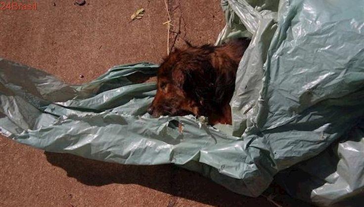 Mais um cão é abandonado para morrer dentro de sacola fechada