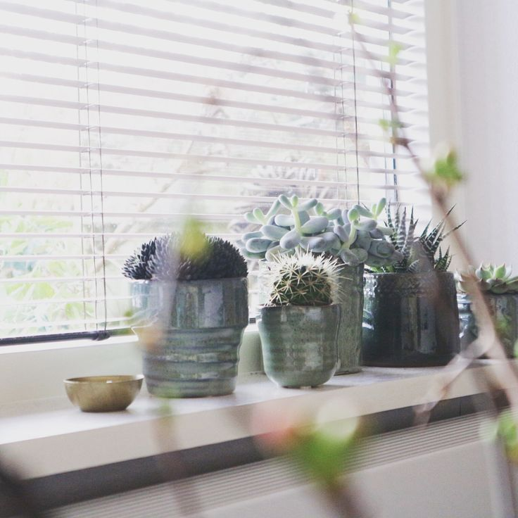 Plants   Peet liles