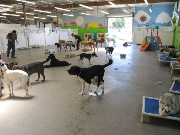 Best 74 dog daycare images on pinterest other discover for Best doggy day care