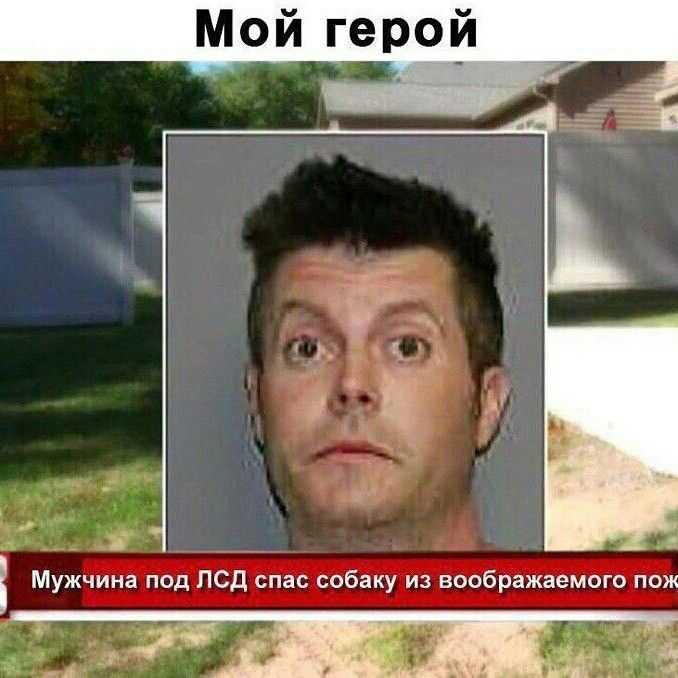 Yumor Haha Sobaka Sobaki Novostitakienovosti Novostdnya Ha Ha Sobaki Yumor