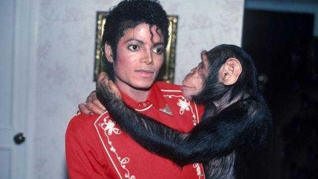 À partir du moment où Micheal Jackson a adopté Bubbles, ce bébé chimpanzé est tout de suite devenu une star. Mais le roi de la pop décédé, voici ce qu'est devenu son petit singe...