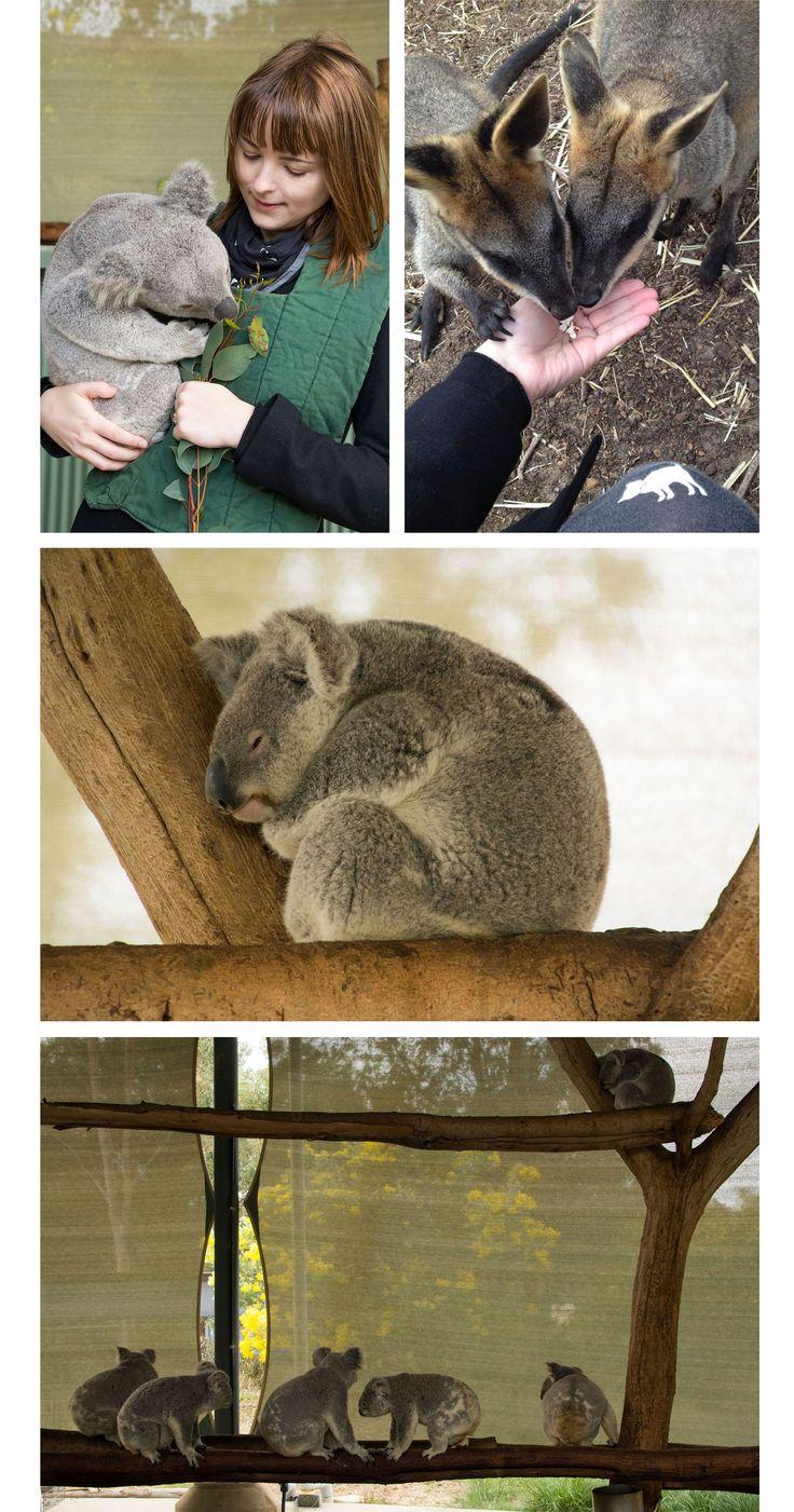 Cohunu Koala Park, Perth, Western Australia