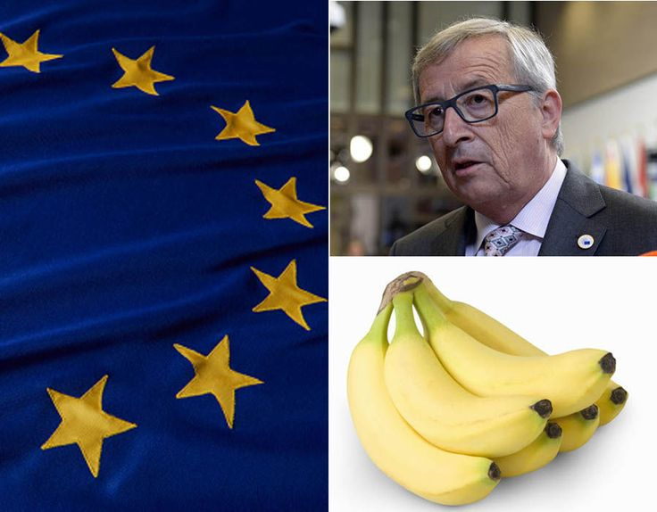 THE European Union (EU) bureaucrats have come up with some bonkers directives. Here are the top eleven unusual rules proposed by Brussels that seem too barmy to be true.