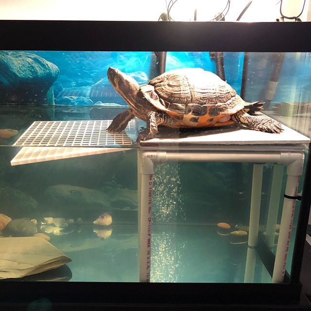 Large Turtle Tower Above Tank Acrylic Model Turtle Basking Platform Turtle Dock Basking Dock Turtle Tank Accessory In 2020 Turtle Basking Platform Turtle Dock Turtle Tank