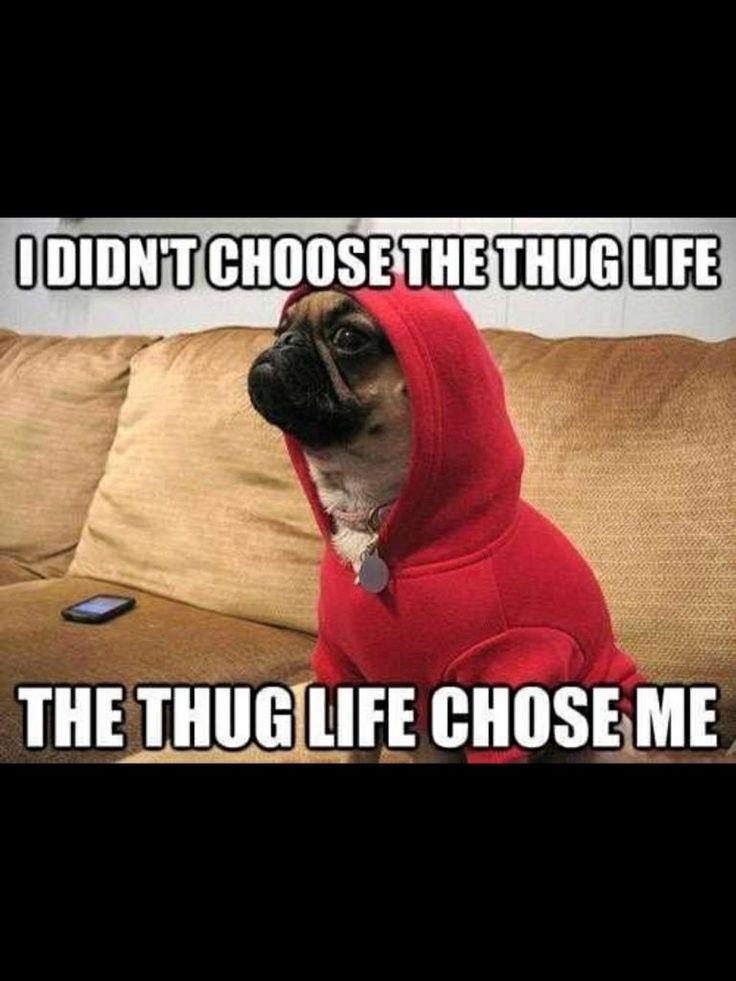 Thug life chose me.   Me,myself and i   Pinterest