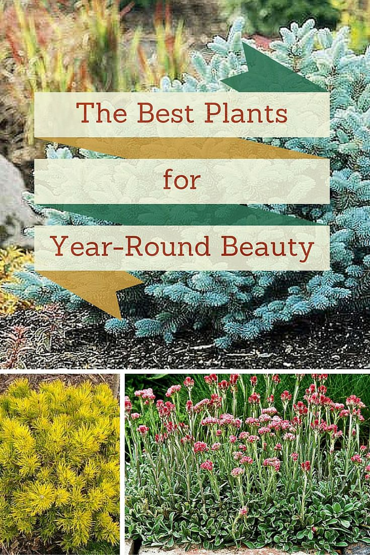 1000 Ideas About Low Maintenance Plants On Pinterest