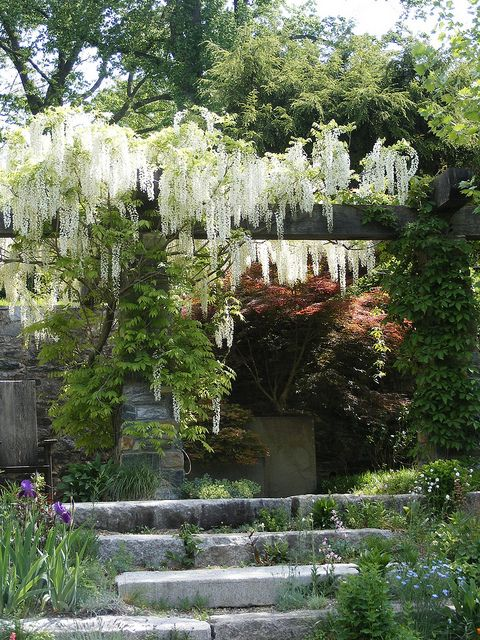 Wisteria-covered pergola at Chanticleer overlooking the pond garden.