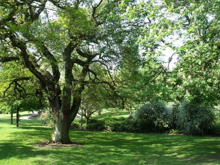 Consejos para elección de árbol para jardín - http://www.jardineriaon.com/consejos-para-eleccion-de-arbol-para-jardin.html