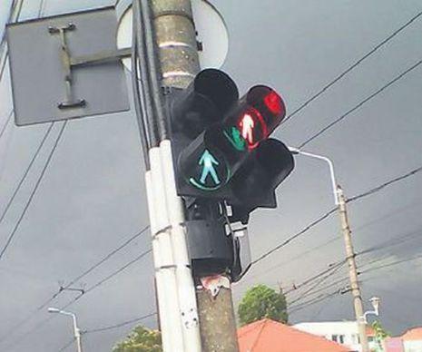 Apariție incredibilă pe una din cele mai circulate străzi din Timișoara…