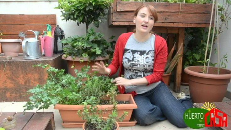 El huerto en casa 26 hierbas aromaticas permacultura - El huerto en casa ...