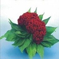 "Kraftseeds- buy seeds online india: Kraft Seeds launches Blog On Its Site ""www.kraftseeds.com"""
