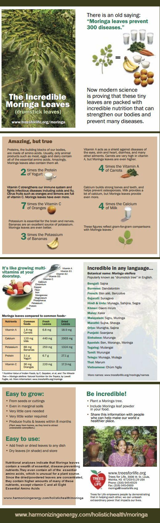 Nutritional analyses indicate that Moringa leaves contain a wealth of essential, disease-preventing nutrients. They even contain all of the essential amino acids, which is unusual for a plant source. Since the dried/powdered leaves are concentrated, they contain higher amounts of many of these nutrients, except vitamin C and all Eight Essential Amino Acids