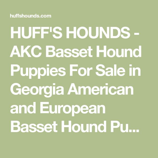 HUFF'S HOUNDS - AKC Basset Hound Puppies For Sale in Georgia American and European Basset Hound Puppies