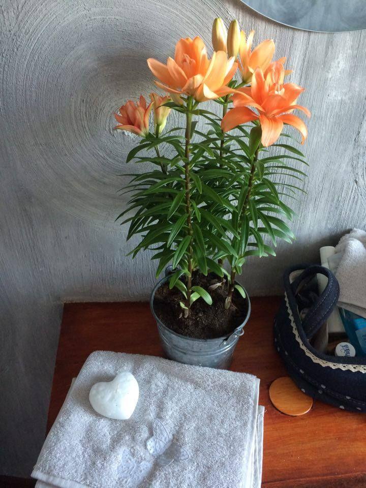 Lilie na Hydroboxie! #hydrobox #hydroboxpl #lilia #lily #kwiaty #kwiat #diy #ikea #flowerpot #doniczka #kwiatydoniczkowe #home #dekoracje #inspirations #ideas