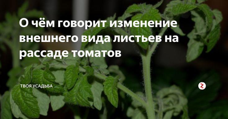 Часто на подросшей рассаде томатов можно заметить, как листики скручиваются к низу, вянут, или сохнут. Причин этому может быть много и нужно в них разобраться, чтоб понять, как помочь молодым растениям. Нехватка минералов Одной из самых распространённых причин является недостаток питательных веществ в грунте. Вот как нехватка минералов сказывается на внешнем виде саженцев:
