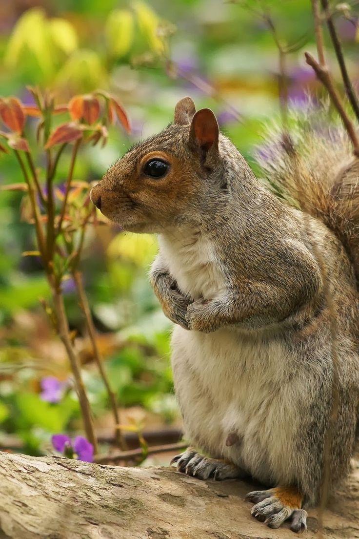 Squirrel by Krzysiek Rabiej: