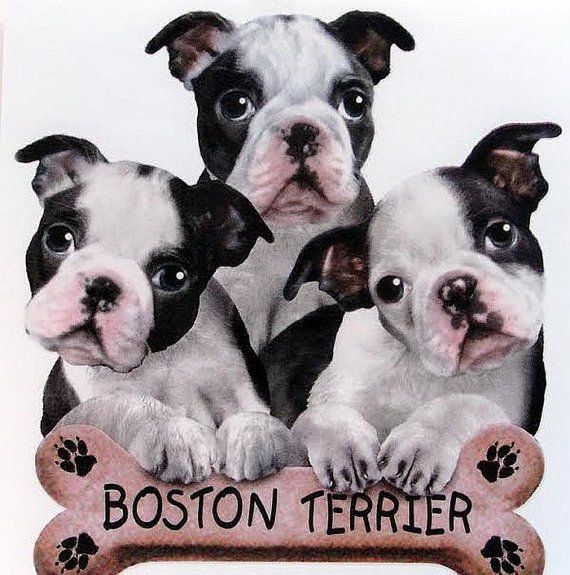 12 best Puppies T Shirts images on Pinterest | Dog prints ...