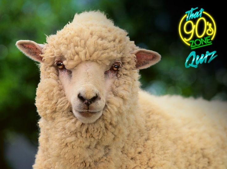 """If you can name the sheep that become the world's first successfully cloned animal in 1996 than take """"That 90's Zone Quiz"""" and you could win your share of R25,000 cash #YourDriveSince95"""