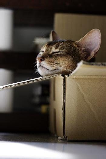 A macskák megmutatják: így kell relaxálni!