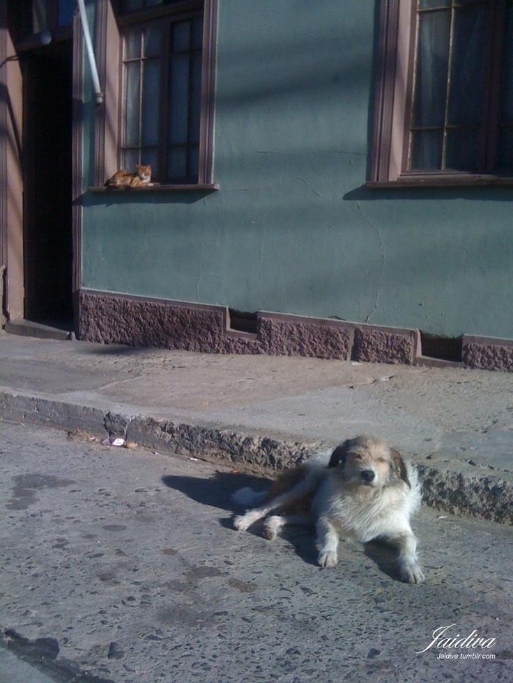 Perro y Gato desde Valparaiso