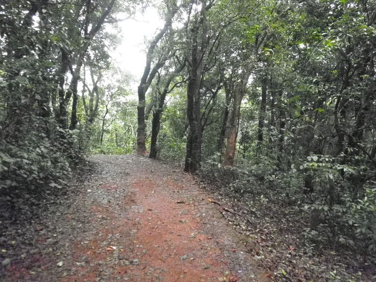 Trek through forest cover of Matheran on Western Ghats in India connecting lookout points with spectacular hill-valley view