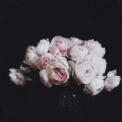Splendido tralcio di rose inglesi