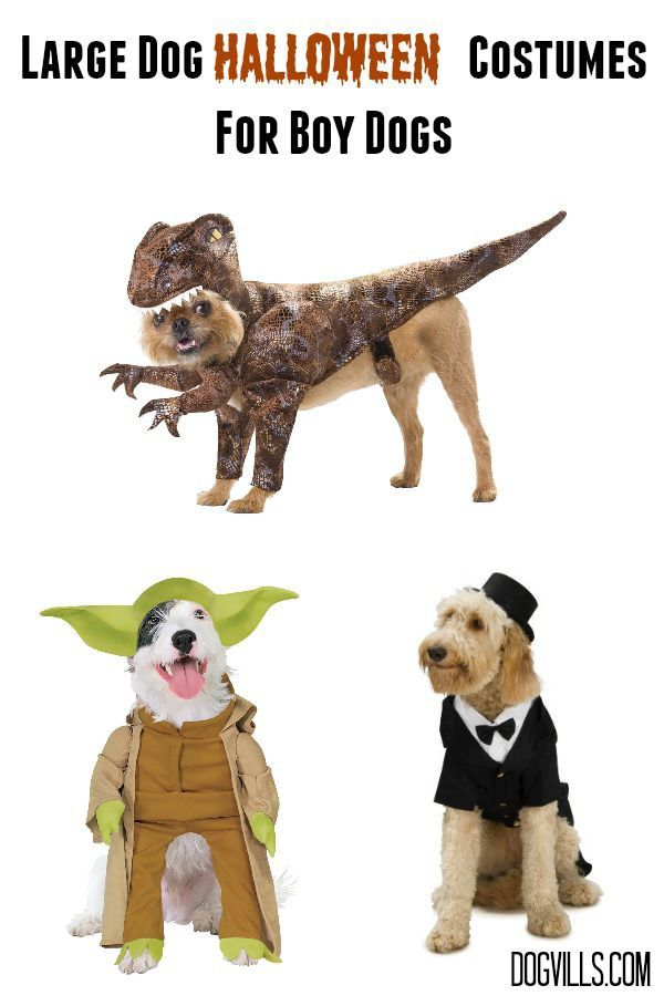 Check out these fun large dog Halloween costumes for your handsome boy dog! Love the Star Wars costumes!