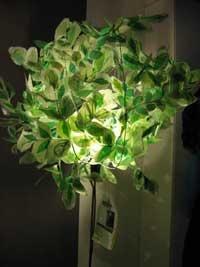 albero lampada