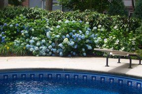 plants around pools | low maintenance landscaping | pool and