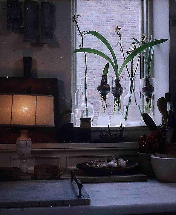 beautiful way to grow bulbs