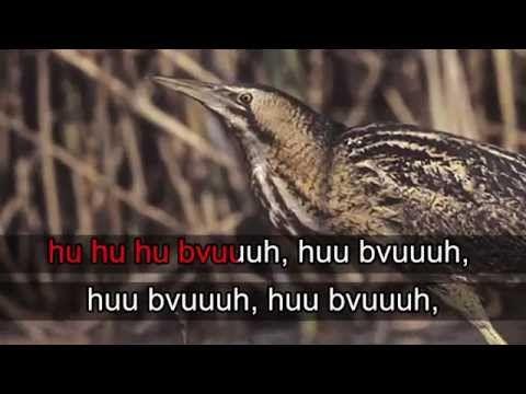 Lintukaraoke: Kaulushaikara - YouTube