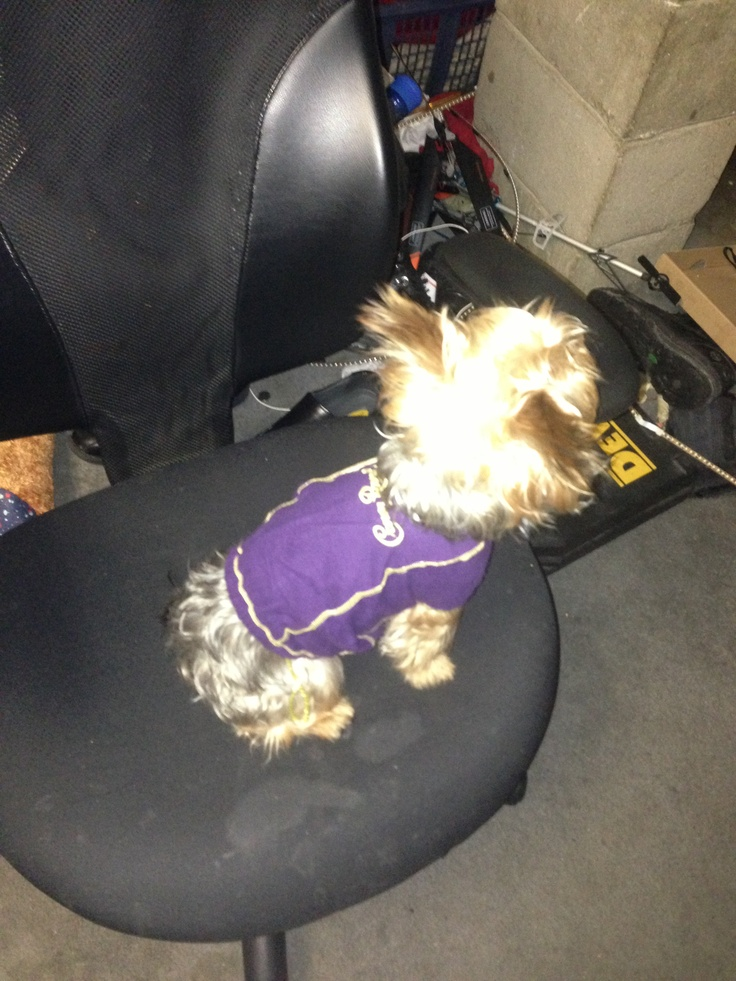 dog in a homemade crown royal bag/sweater. Cute.