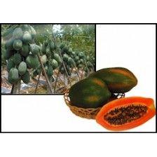 #Vegetable Seeds Online India, #Herb Seeds, #Flower Seeds, Garden #Seeds, #Flower Seeds Online, #Online seeds Store, Hers #Seeds Online http://kraftseeds.com/vegetable-seeds/kraft-recommended-vegetable-seeds